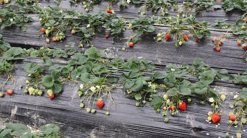 Укрывные материалы для огорода: виды и особенности