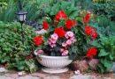 Кому покой, кому подсветка. Помогаем комнатным цветам пережить осень и зиму